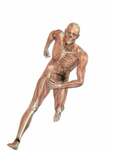 Running Physiology